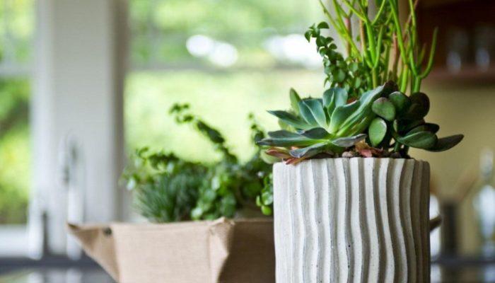 Les 11 plantes les plus faciles à entretenir