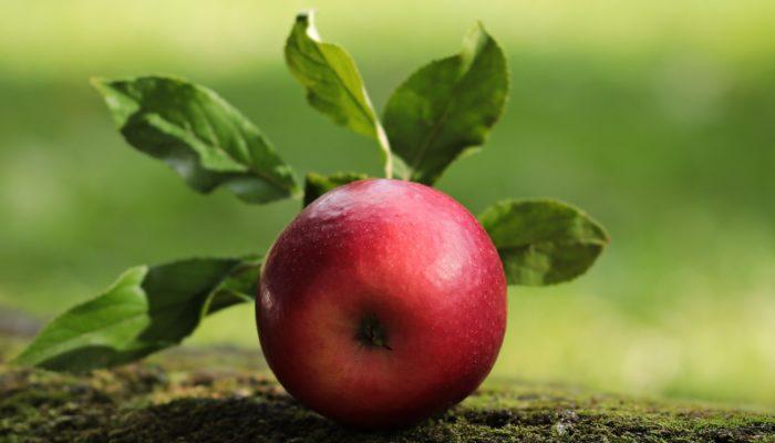A quoi servent les pommes?