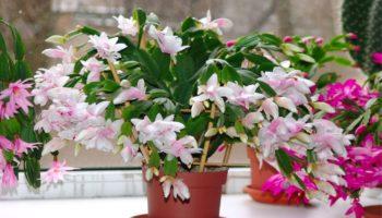 Quelles plantes de la maison fleurissent - 8 espèces étonnantes