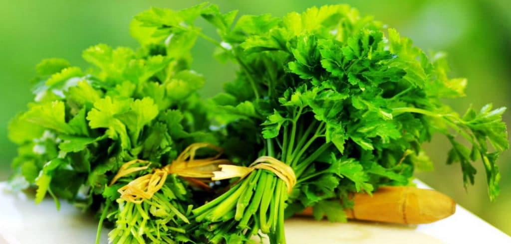 10 types de verdure pouvant être plantés dans le jardin