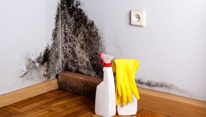 Comment se débarrasser de la moisissure dans l'appartement?